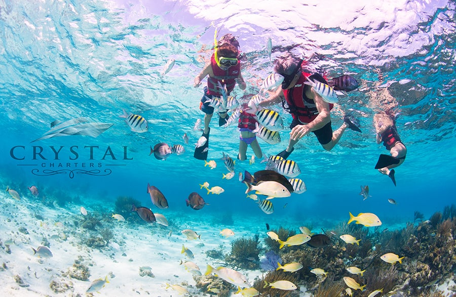 snorkel Cayman Crystal Charters