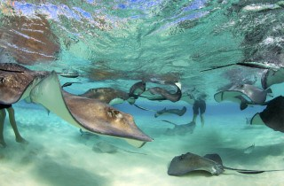 Crystal Charters Cayman Stingray City