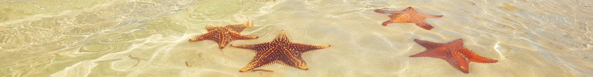 Slider-starfish-2