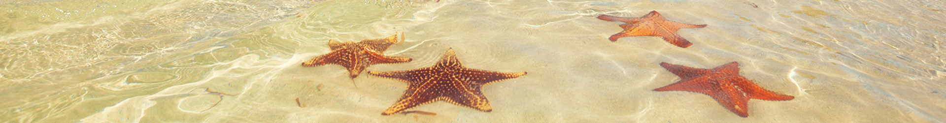 Slider-starfish-2