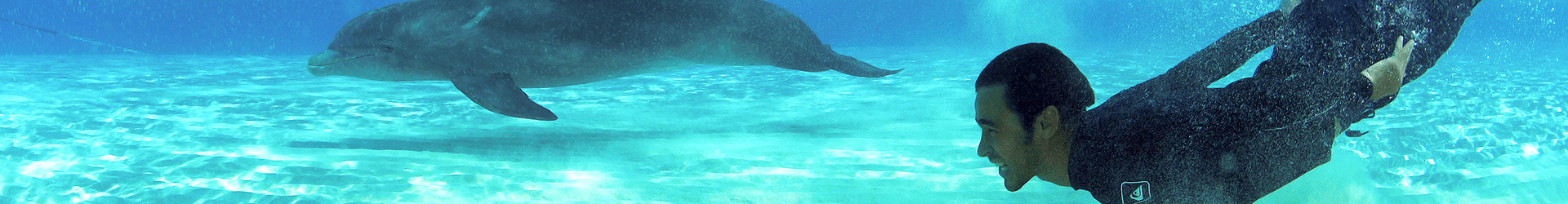 Sliderdolphin