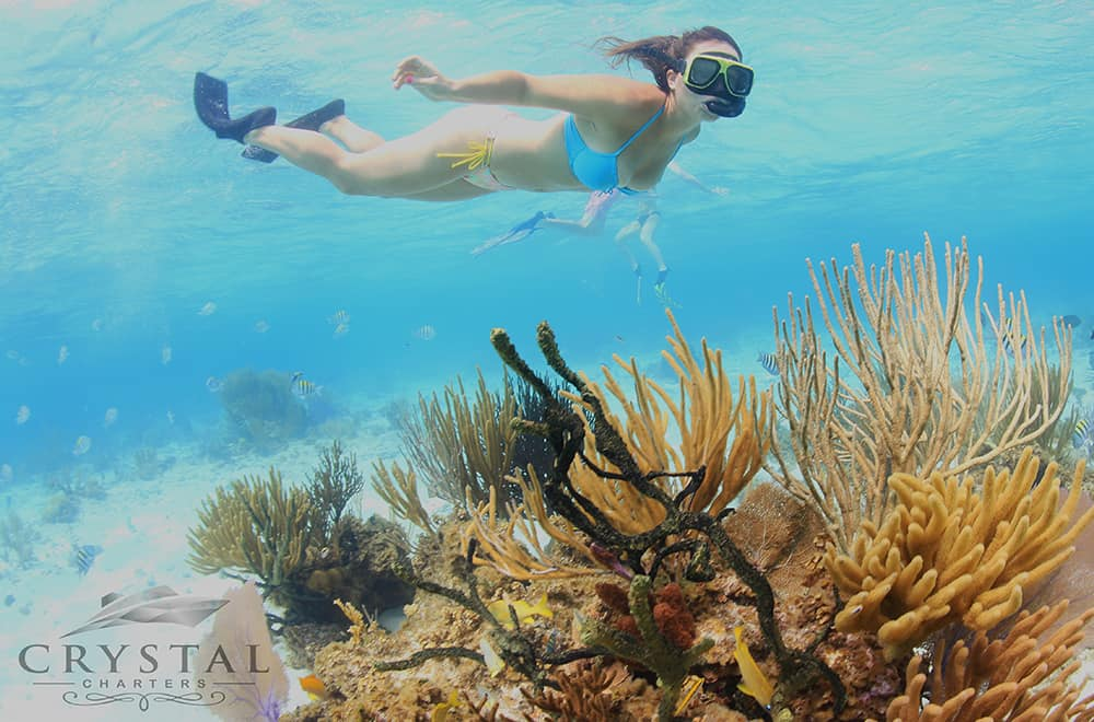 Crystal Charters Cayman snorkeling
