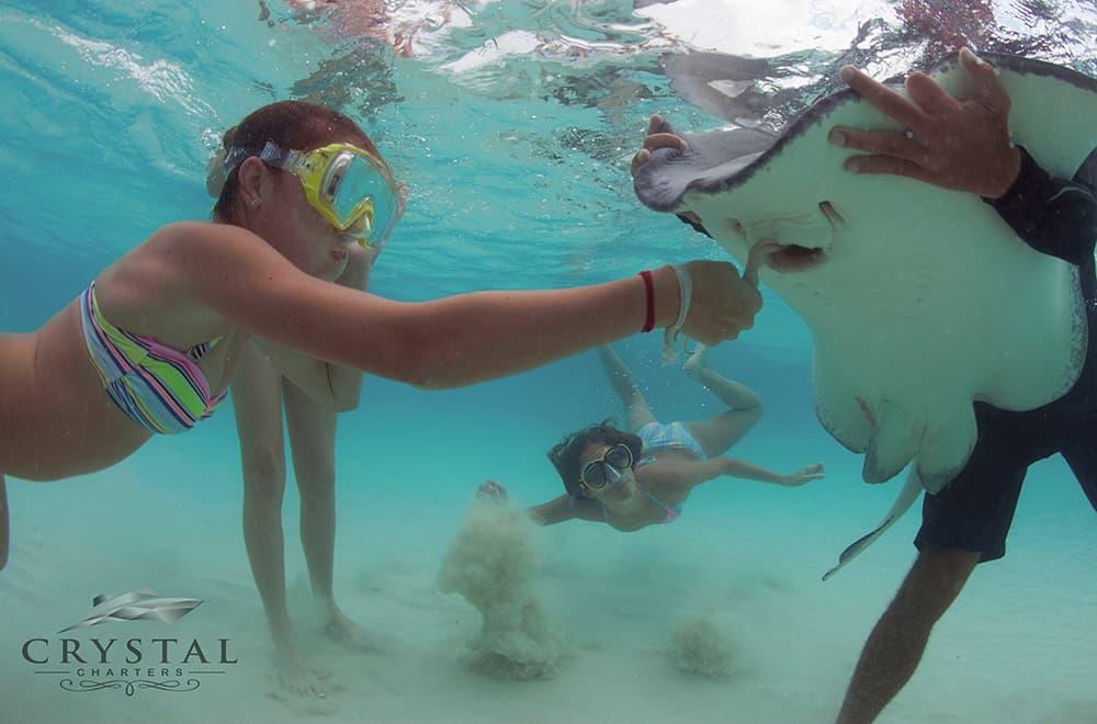 Crystal Charters Cayman feeding stingrays
