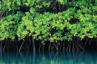 Crystal Charters Grand Cayman Mangroves