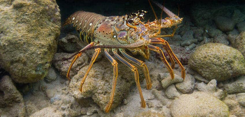 Snorkeling Cayman Islands