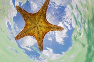 Starfish Point