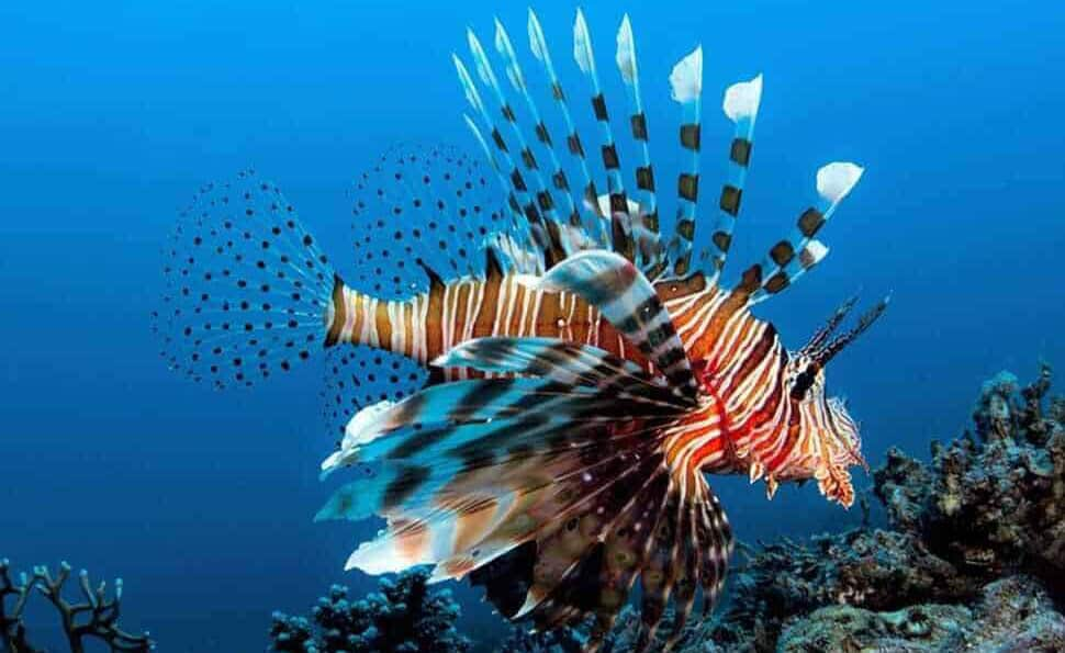 Boat Tours and Snorkeling Cayman Islands