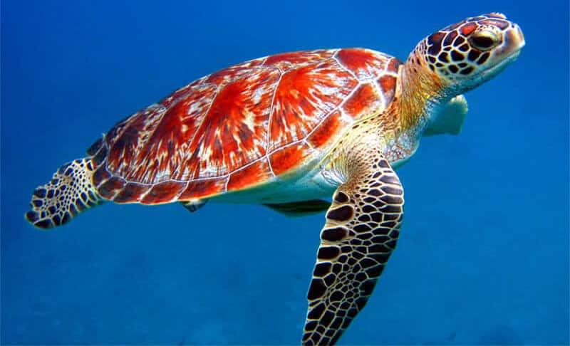 Grand Cayman Snorkeling Tours