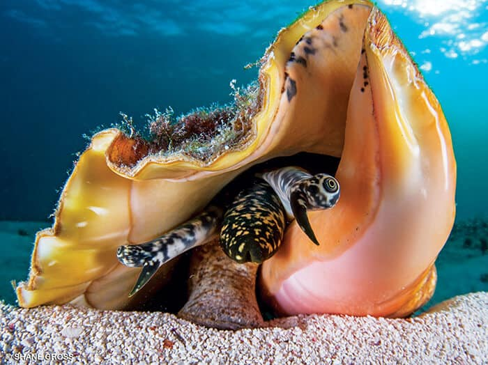 Fishing Cayman Islands
