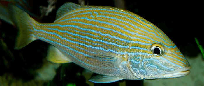 Fishing Grand Cayman