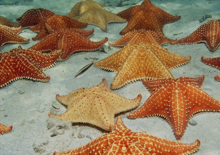 Starfish Point - Grand Cayman Boat Charters